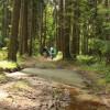 V lese u Hradešína...