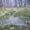 Obrázek k článku Kvarta A v přírodě