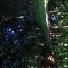 Obrázek k článku Velbloud se čtyřmi hrby