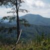 Obrázek k článku AG vlese – opěším Slovensku 2020